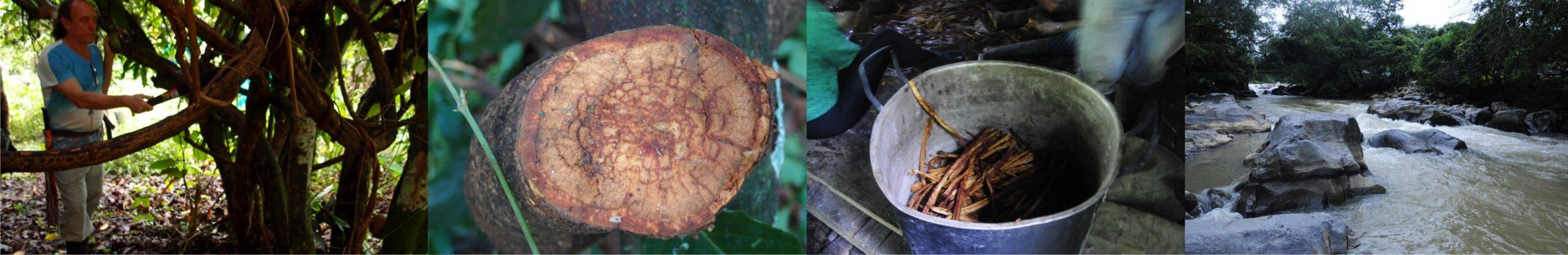 imagenes selva mocoa 4